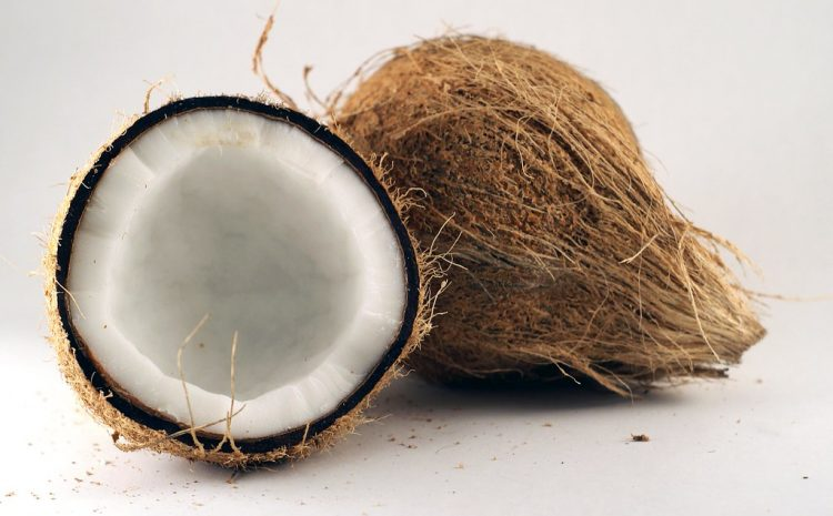 New coconut variety springs hope for farmers