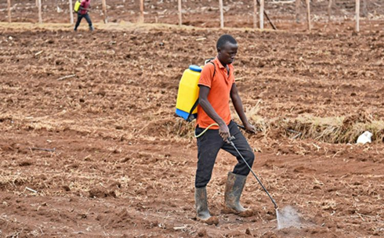 How farmers compromise food safety