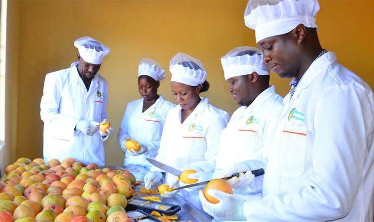 Startup turning around mango farmers' fortunes