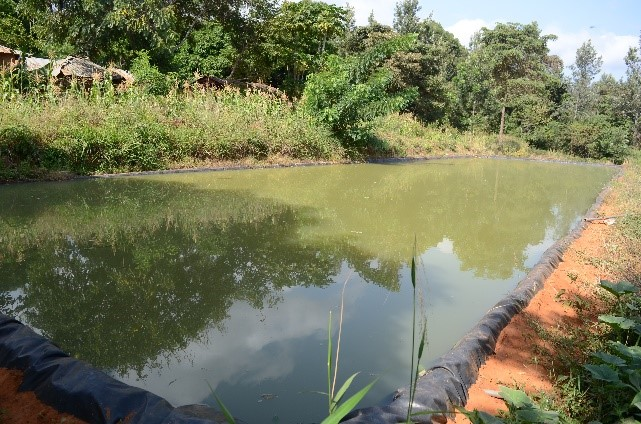 Water harvesting interventions helping farmers reap big
