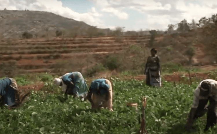 Natural Resource Management Programme Interventions -Makueni County Case Study