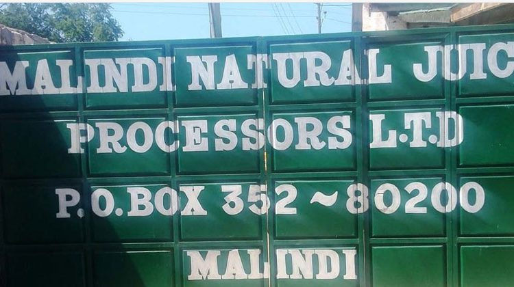 Malindi Firm Finds Footing In Mango Processing