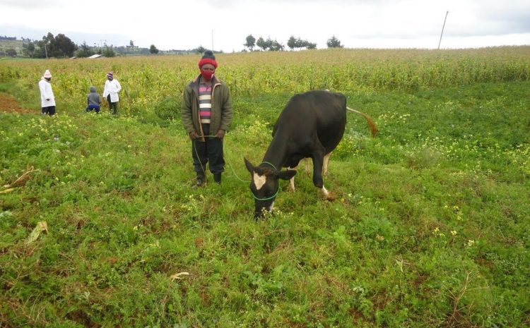 Wazo Moja Dairy Cooperative Case Study