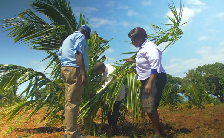 KALRO Matuga partnership with MESPT on Hybrid Coconut Project