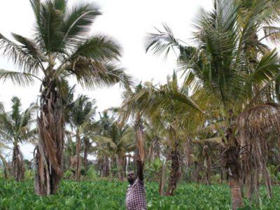 coconutt-img